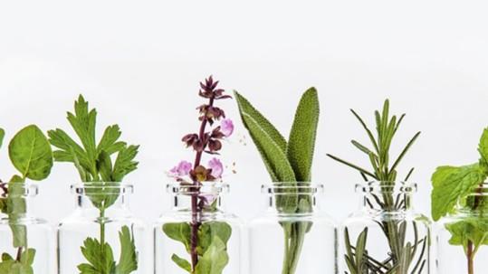 coltivare piante aromatiche humus