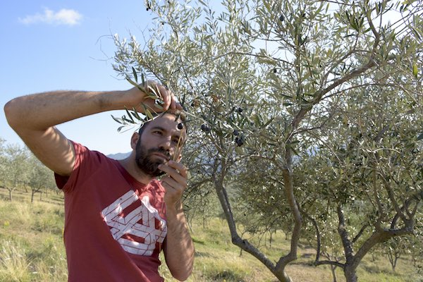 Olio extravergine di oliva, prezzo al litro