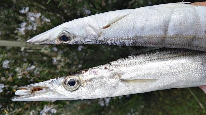 Comprare pesce locale