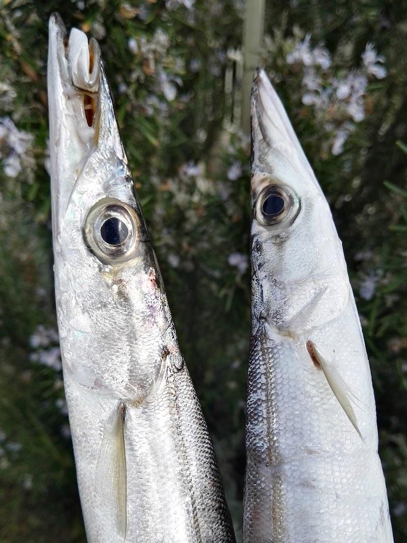 Pesce della Costiera amalfitana - Corso di cucina di pesce